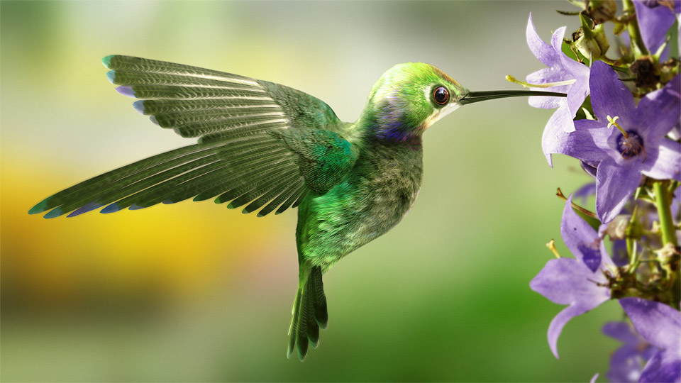 What We Can Learn From The Hummingbird Dave Mierau