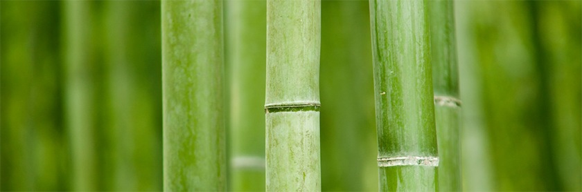 world-bamboo-day