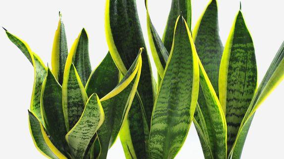 3021742-poster-1280-desk-plant-productivity